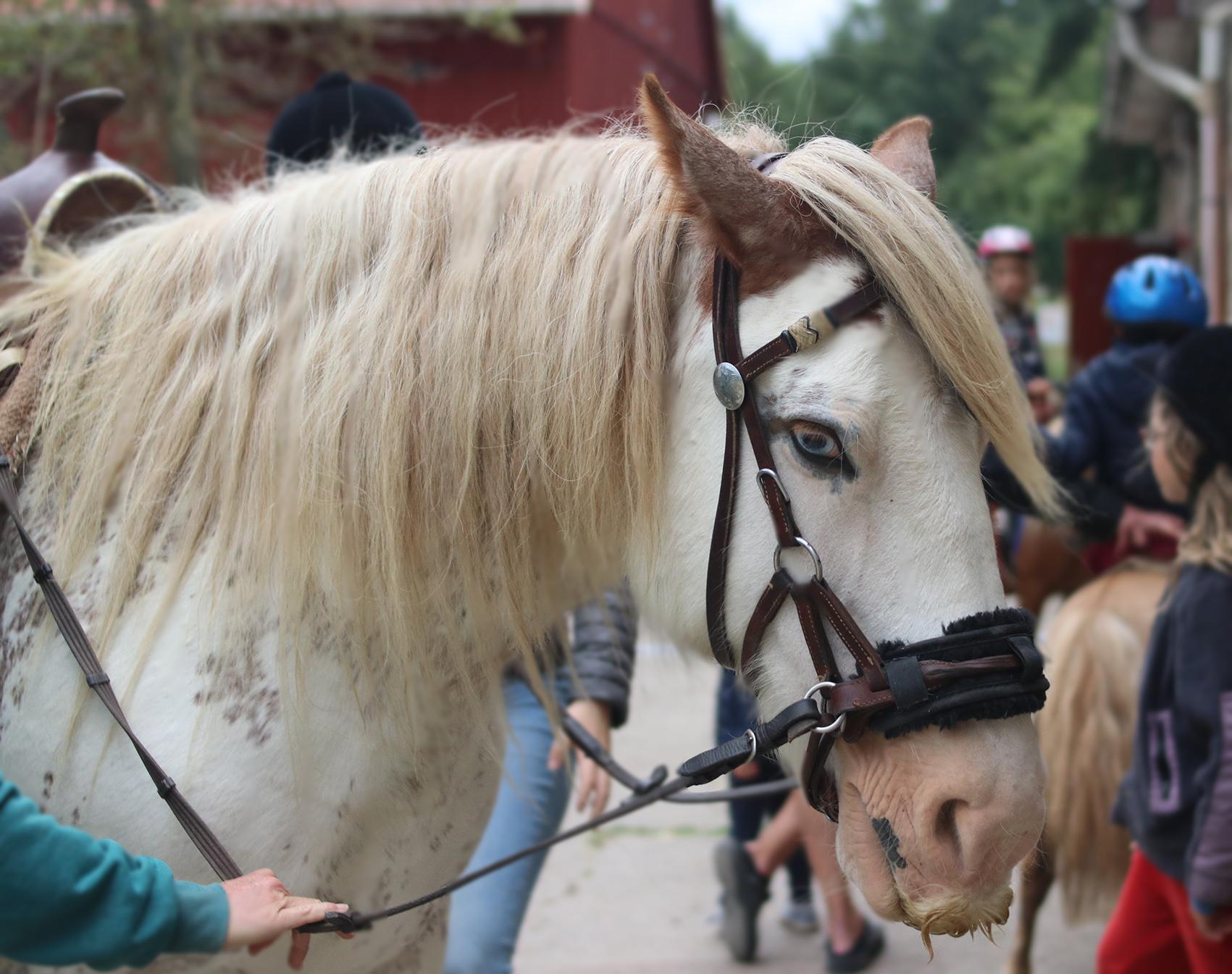 Ein Pferd mit Schnurrbart