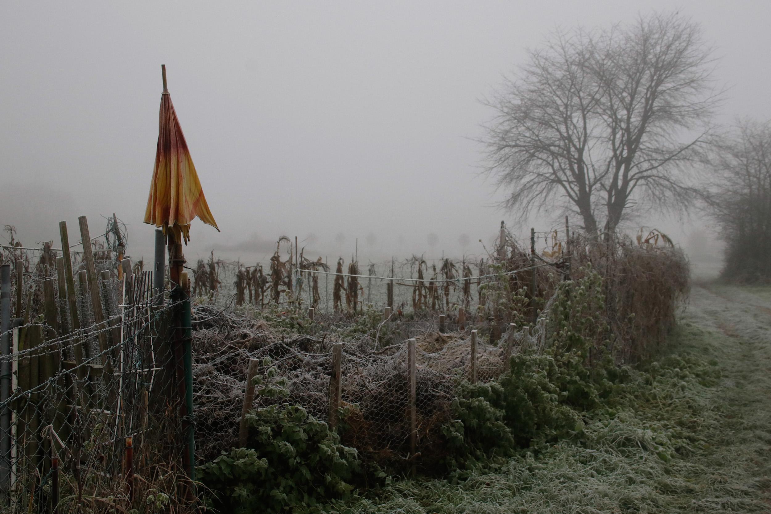 Garten im Nebel mit Schirm