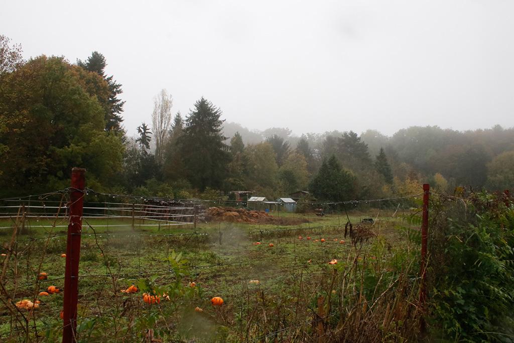 herbstliches Feld im Regen, Nathalie Heinke