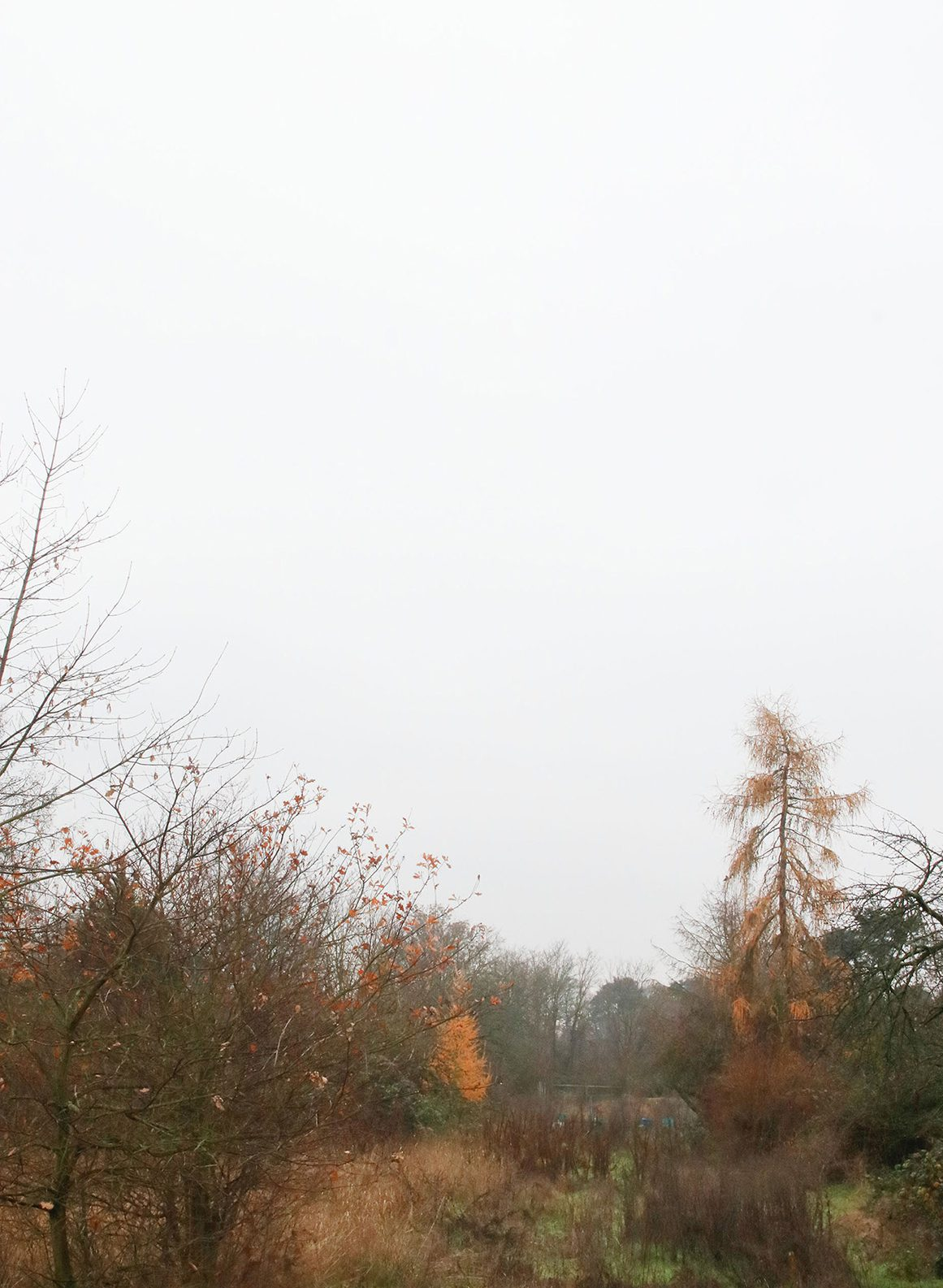 roter Baum, Nathalie Heinke
