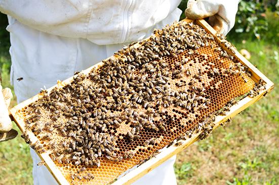 Bienen auf Rähmchen mit Waben