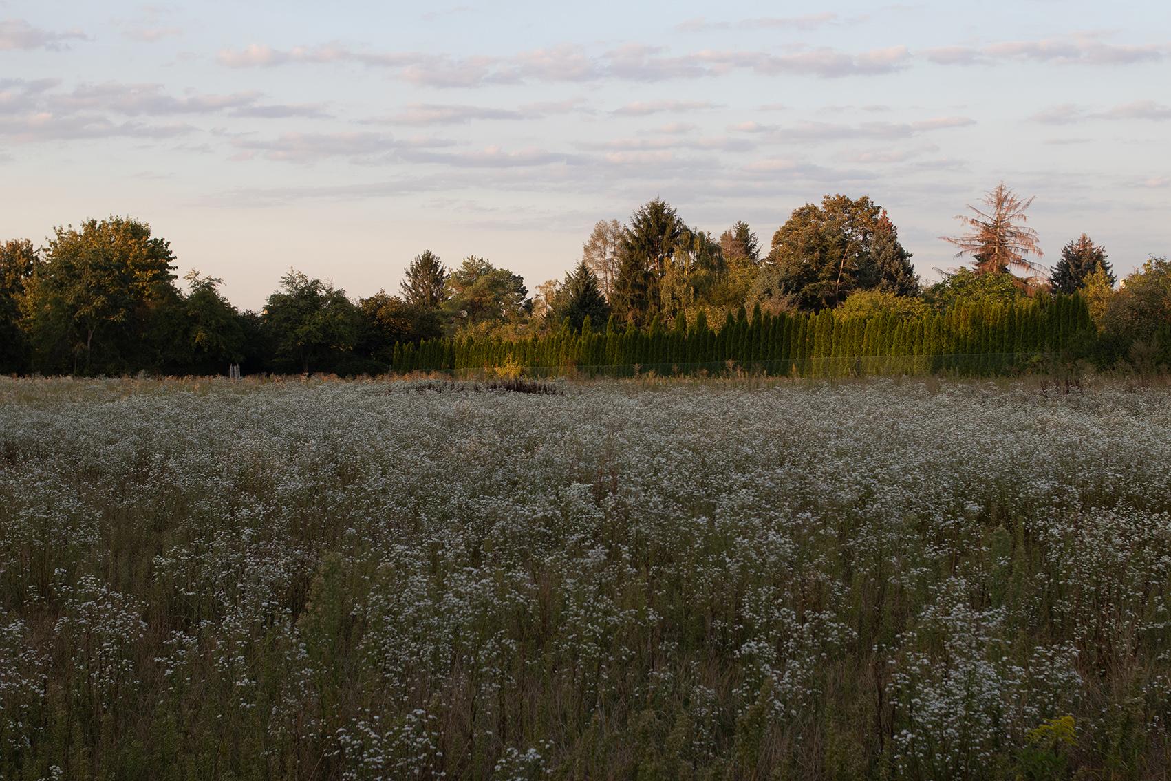 Landschaft Oberrad Spätsommer