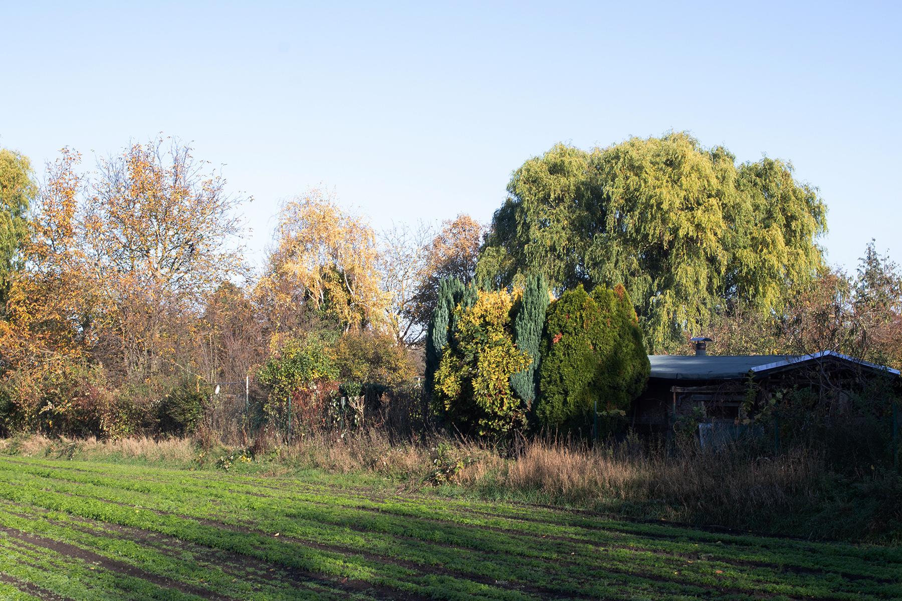 Landschaft Spätherbst